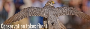 The Southeastern Wildlife Exposition image of hawk with Conservation takes flight title